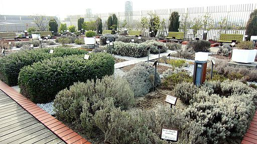 Herb_garden_of_National_Museum_of_Nature_and_Science_Tokyo_02
